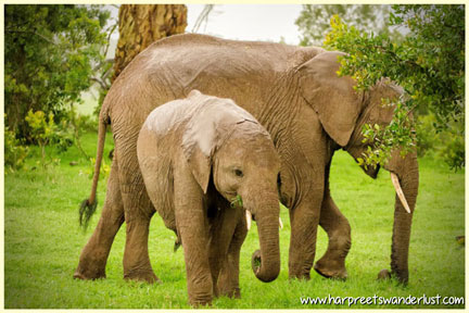Gentle giants....do support Ellie Tees! Help save these majestic creatures....
