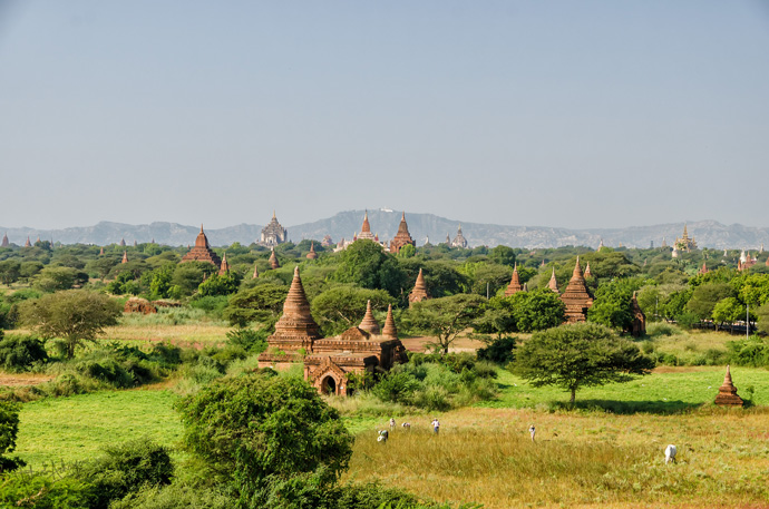 Temples, temples, as far as the eye can see!