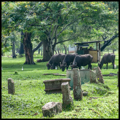 footsteps-in-the-ancient-cities-of-sri-lanka-anuradhapura-5