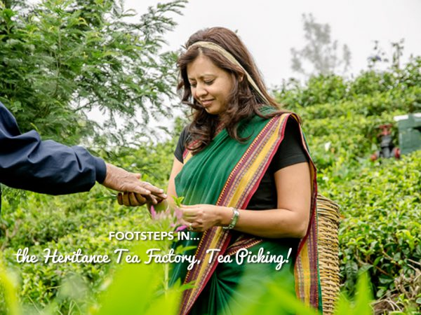 Footsteps in…the Heritance Tea Factory, Tea Picking!