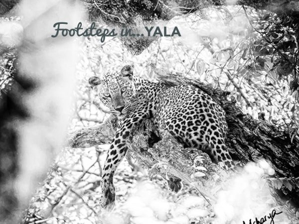 Footsteps in…Yala
