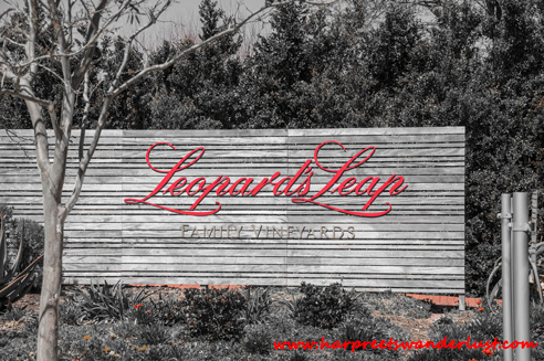Leopard's leap – one of the nicest wine tasting rooms