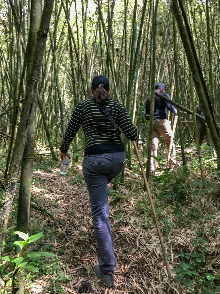 Trekking through the Bamboo Forest