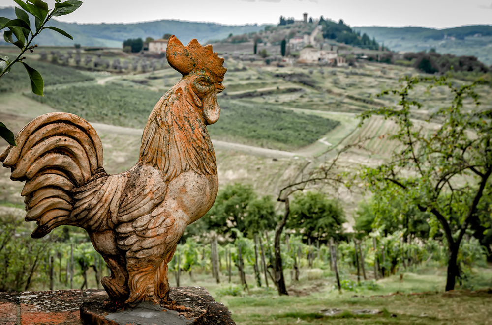 Cock a doodle Tuscany!