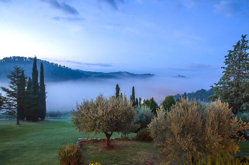 THIS VIEW!!!! Mist over the hills and the olive grove right outside our room!