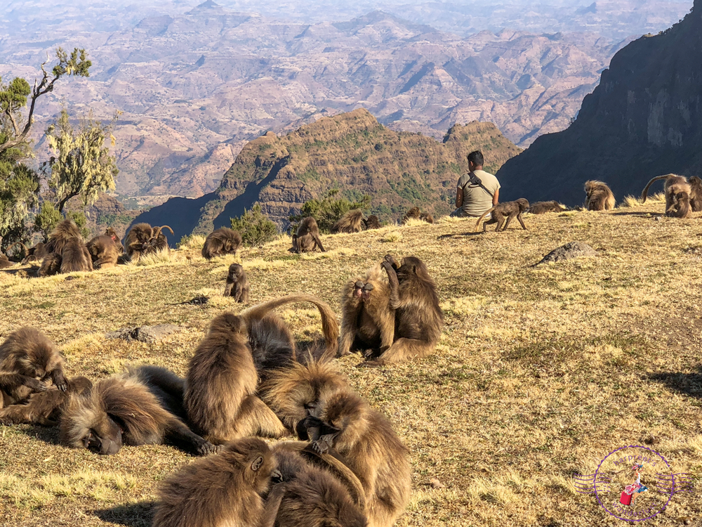 Wanderlustmate M chilling with the Geladas