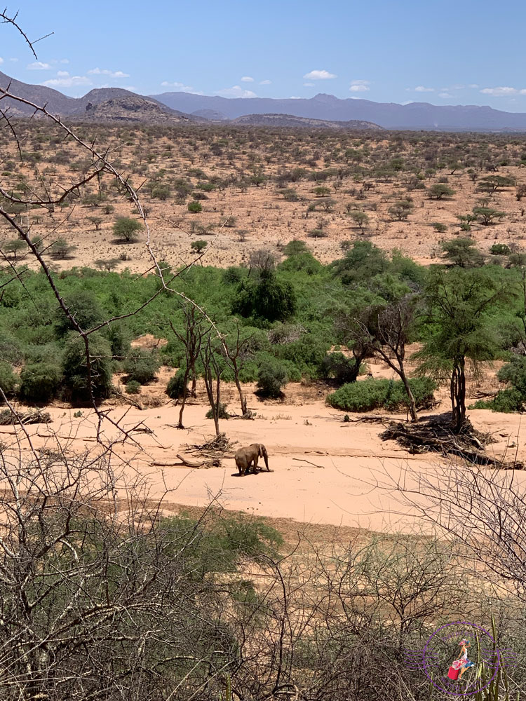 Lone Elephant Bull on the dry River Bed